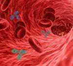 virus, pathogen, antibody