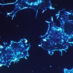 Novel Antibody Drug Wakes Up the Body's Defense System in Advanced-stage Cancer
